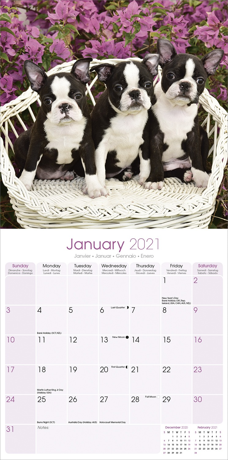 Magnet and Steel Wall Calendar 16 months 2020 French Boston Terrier