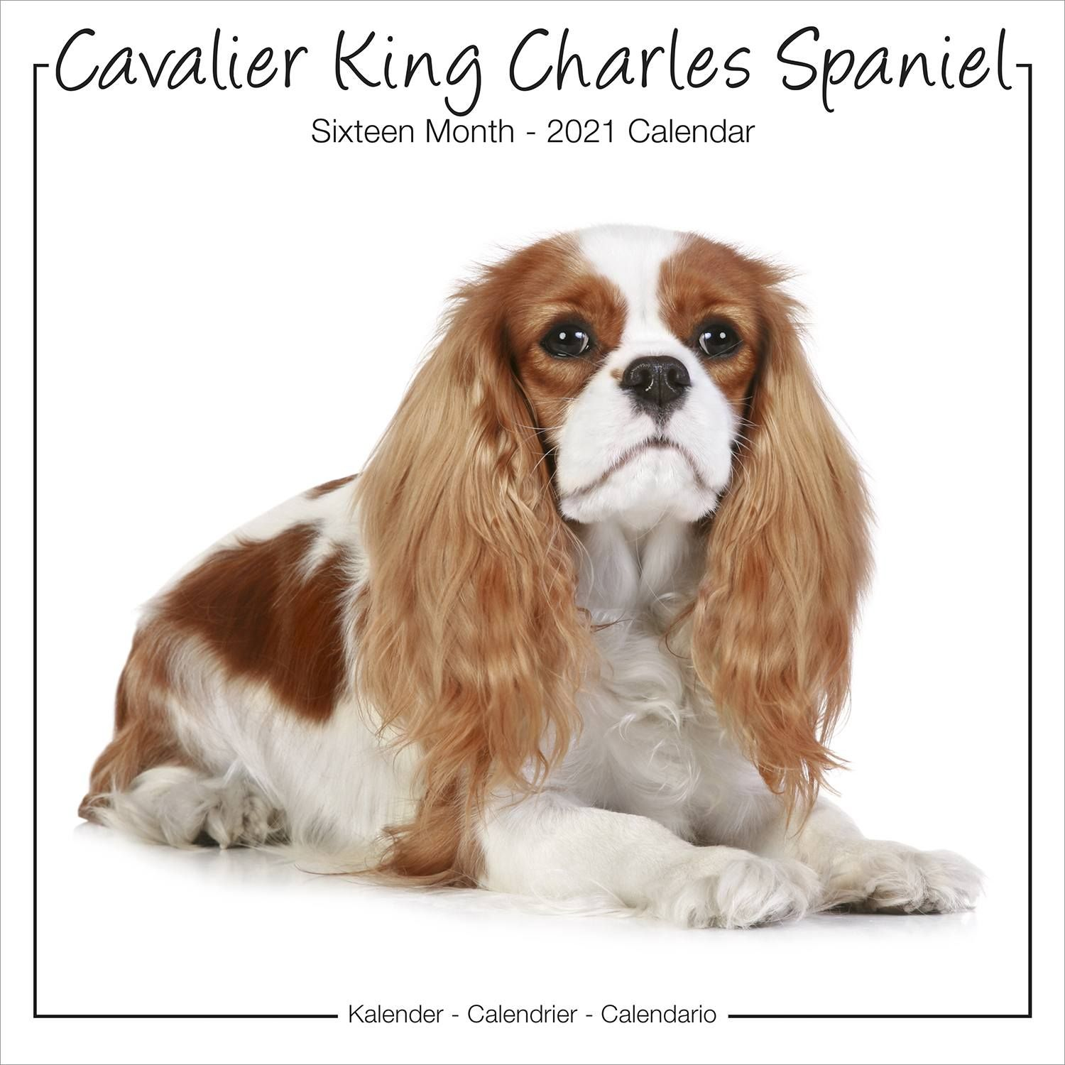 Cavalier King Charles Studio Range Calendar, Dog Breed | Pet